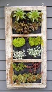 A salvaged window makes a great garden element