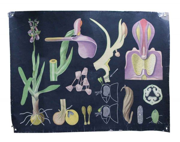 Posters - Imported Vintage Floral School Poster