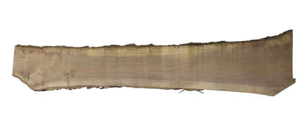 Live Edge Wood Slabs - 15 Foot Walnut Slab I2